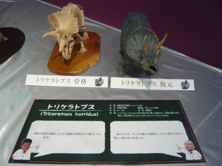 骨格と復元を比較